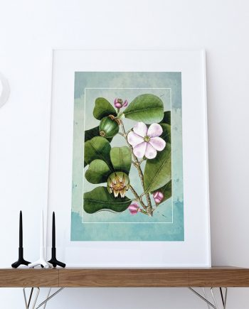 Magnolia Catesby Flowering Tree decor Catesby botanical print flower decor floral print floral wall decor wall art Canvas
