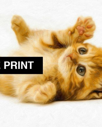 Marmalade Kitten Print Illustration Decor Ocean Wall Art - Large Giclee Print on Canvas Cotton and Satin Photo Paper