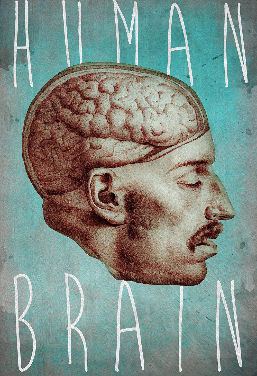 Medical Anatomy Illustration Human Brain Print Vintage ...