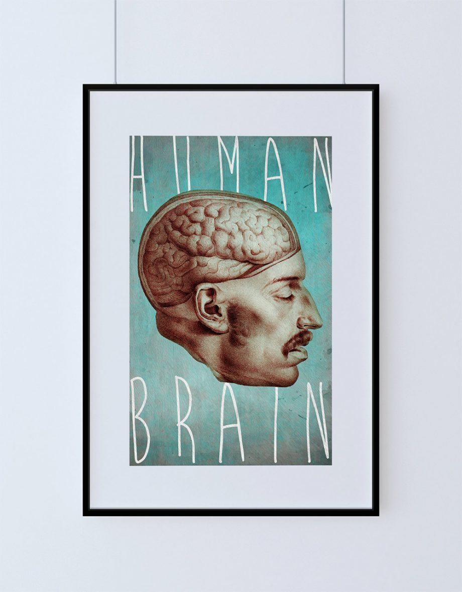 "Medical Illustration Human Brain Print Vintage Illustrated Human Giclee Cotton Canvas or Satin Paper Wall Decor Art Print 18x24"" 24x36"""