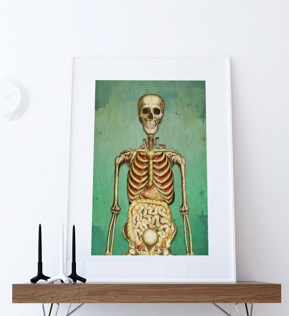 Medical Illustration Skeleton Print Vintage Illustrated Antique Human Giclee Cotton Canvas or Paper Canvas Wall Decor Art