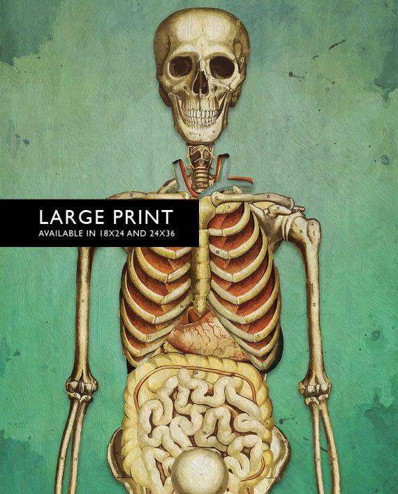 Medical Illustration Skeleton Print Vintage Illustrated Human Giclee