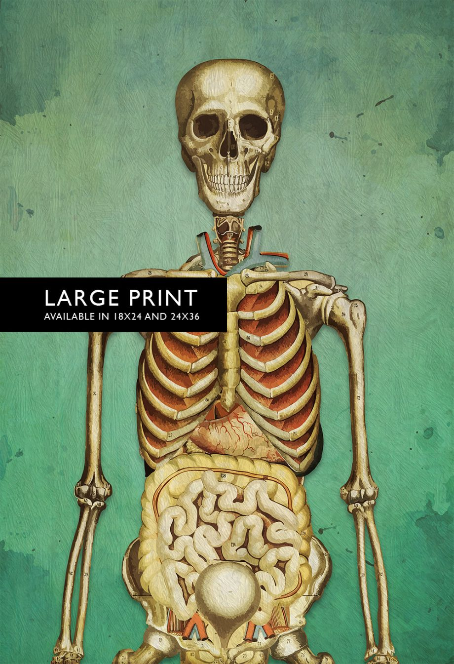 "Medical Illustration Skeleton Print Vintage Illustrated Human Giclee Cotton Canvas or Satin Paper Wall Decor Art Print 18x24"" 24x36"""
