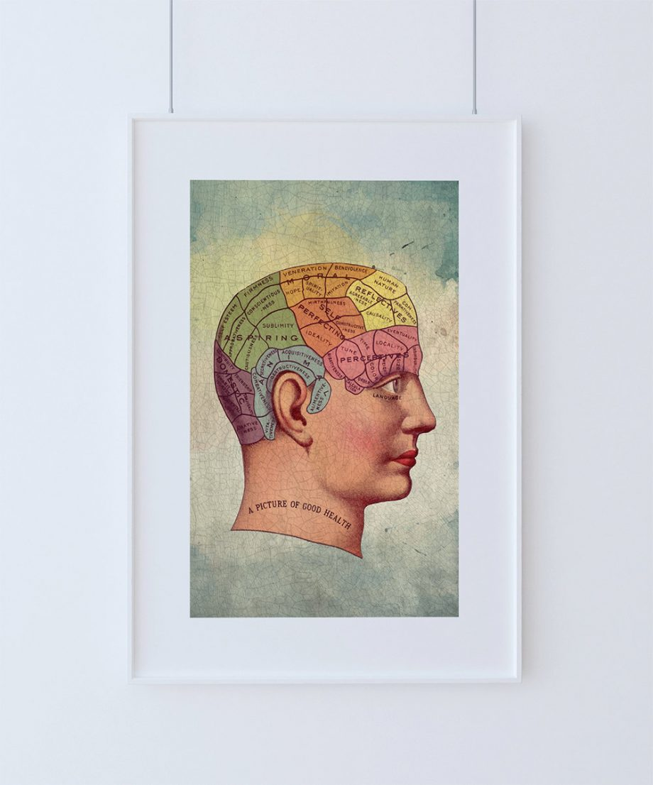 Medical Illustration Vintage Victorian Human Brain Anatomy Poster 18x24 24x36 - Large Giclee Print on Cotton Canvas and Satin Photo Paper