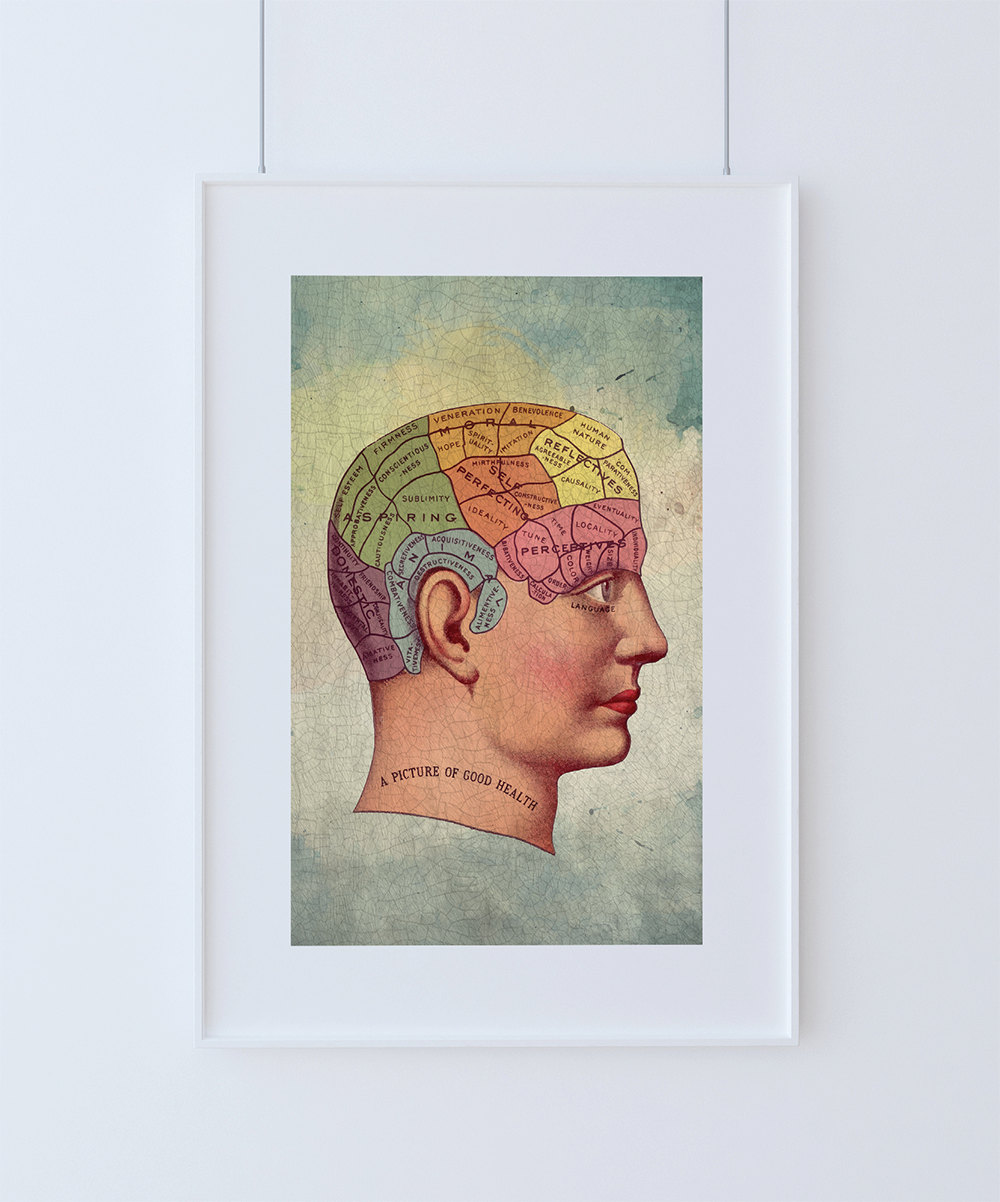 Medical Illustration Vintage Victorian Human Brain Anatomy Poster 18 ...