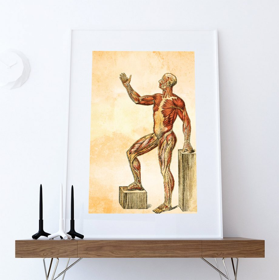 Medical Illustration Vintage Victorian Human Muscle Anatomy Poster 18x24 24x36 - Large Giclee Print Cotton Canvas and Satin Photo Paper