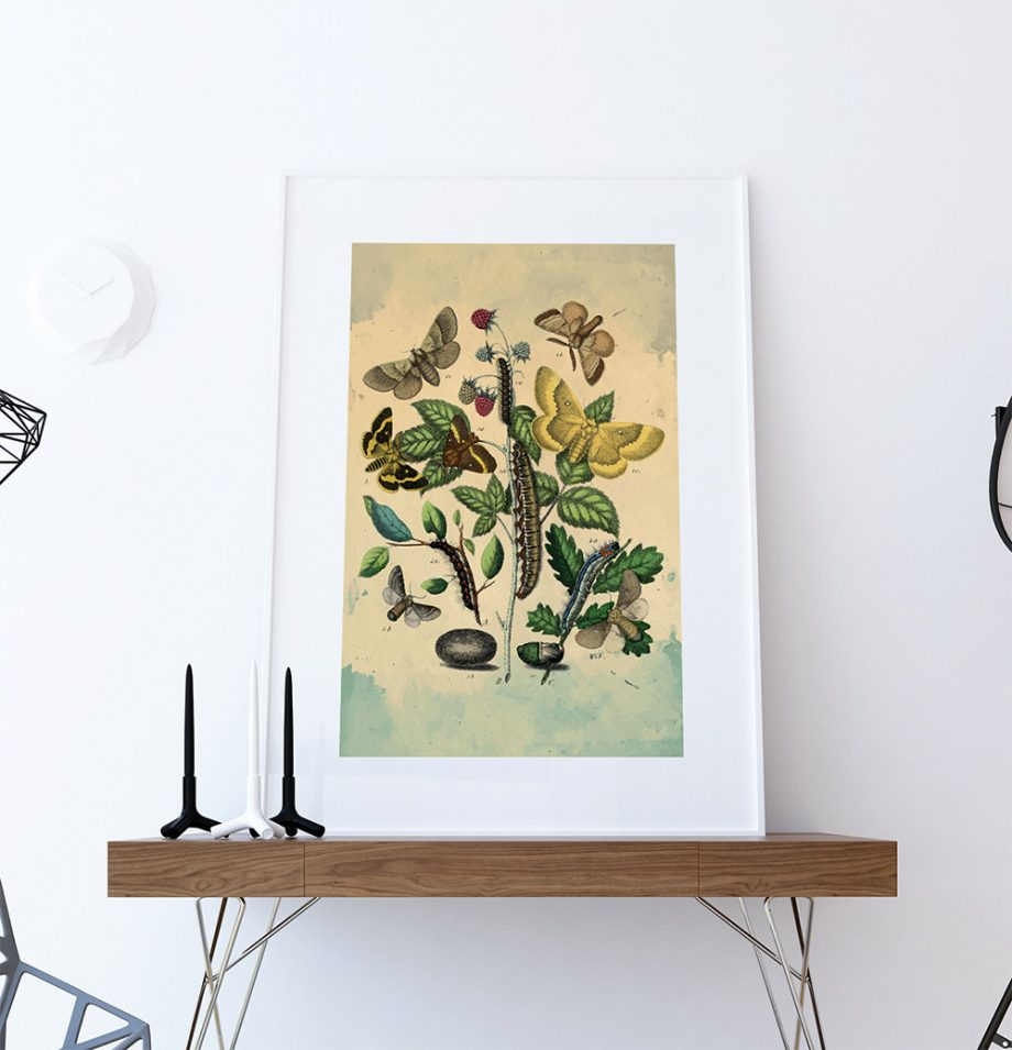 Moth art Caterpillar botanical Natural Botanical print decor Moth print Moth wall decor Caterpillar wall art Natural History Print on Canvas