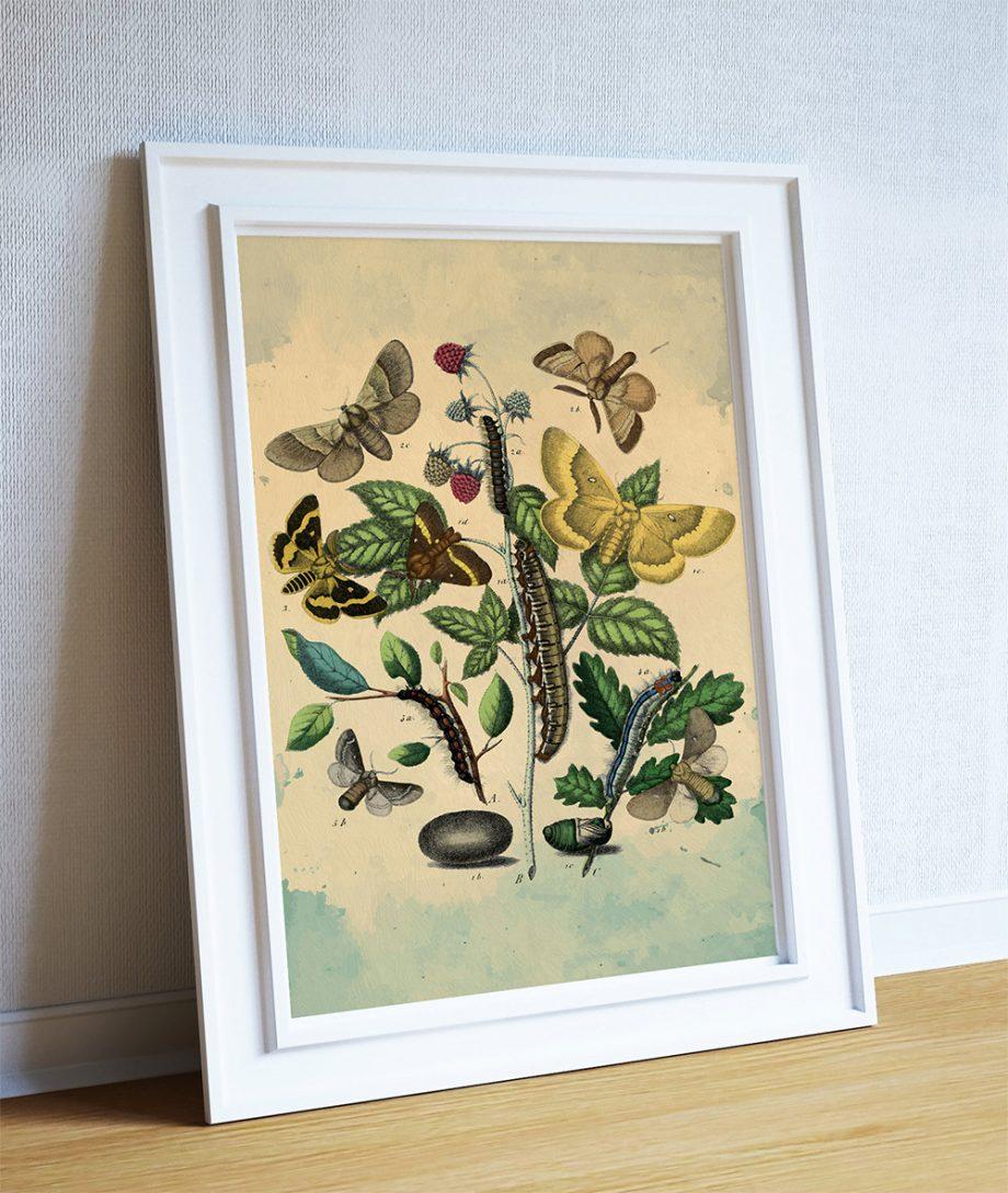 Moth art gift botanical Natural Botanical print decor Moth print Moth wall decor Caterpillar wall art Natural History Print on Canvas