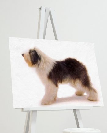 Olde English Sheep Dog Print illustration Art Print Poster Giclee on Cotton Canvas and Paper Canvas Wall Decor