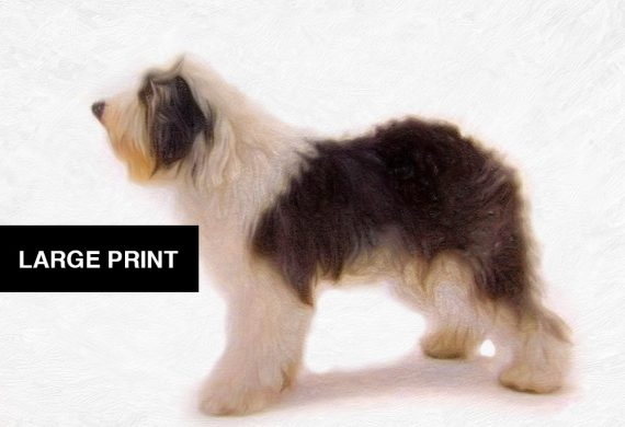 Olde English Sheep Dog Print illustration Art Print Poster Giclee on Cotton Canvas and Satin Photo Paper
