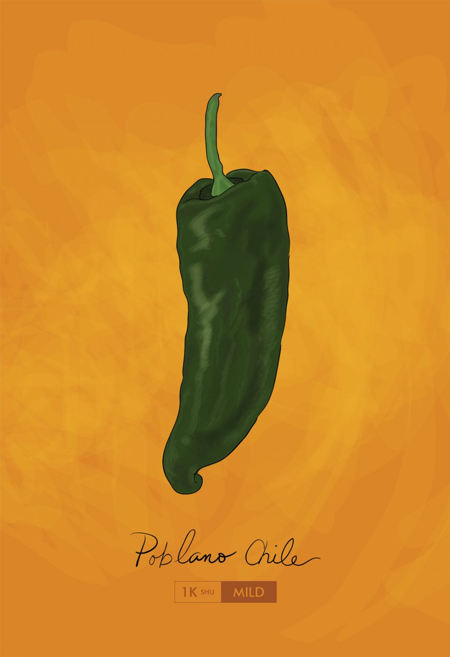 Poblano Chili Pepper Kitchen Print Giclee Original Art Large Print Poster on Satin and Cotton Canvas Mexican Home Decor