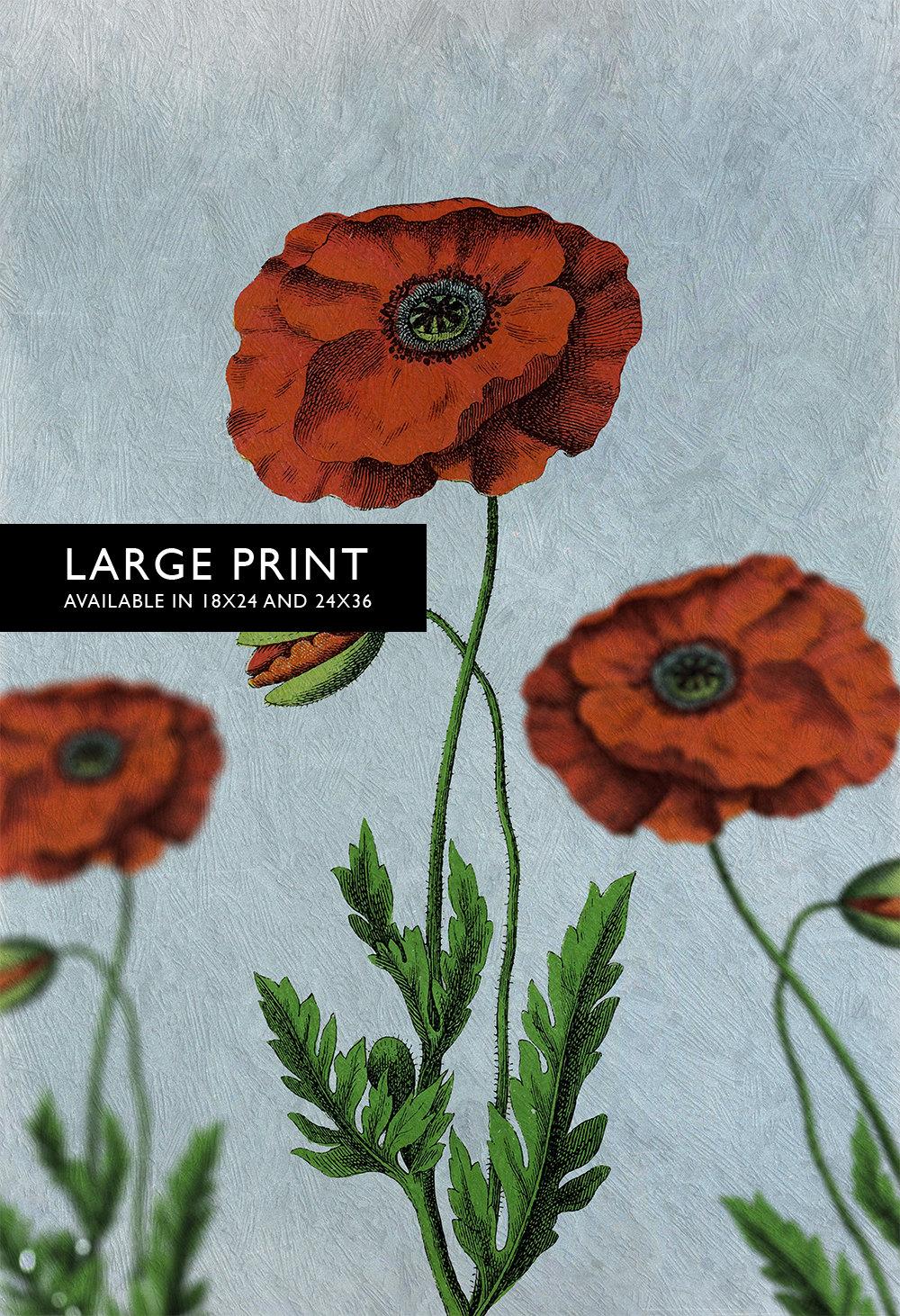 Poppy Decor Art Flower Botanical Poppy Print Kitchen Decor Floral