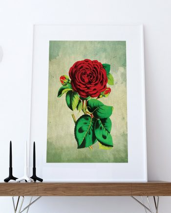 Rose decor Red Rose art Rose gift botanical print flower kitchen decor floral print floral wall decor wall art Canvas