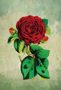 rose-decor-red-rose-art-rose-gift-botanical-print-flower-kitchen-decor-floral-print-floral-wall-decor-wall-art-canvas-5817a9dd4.jpg