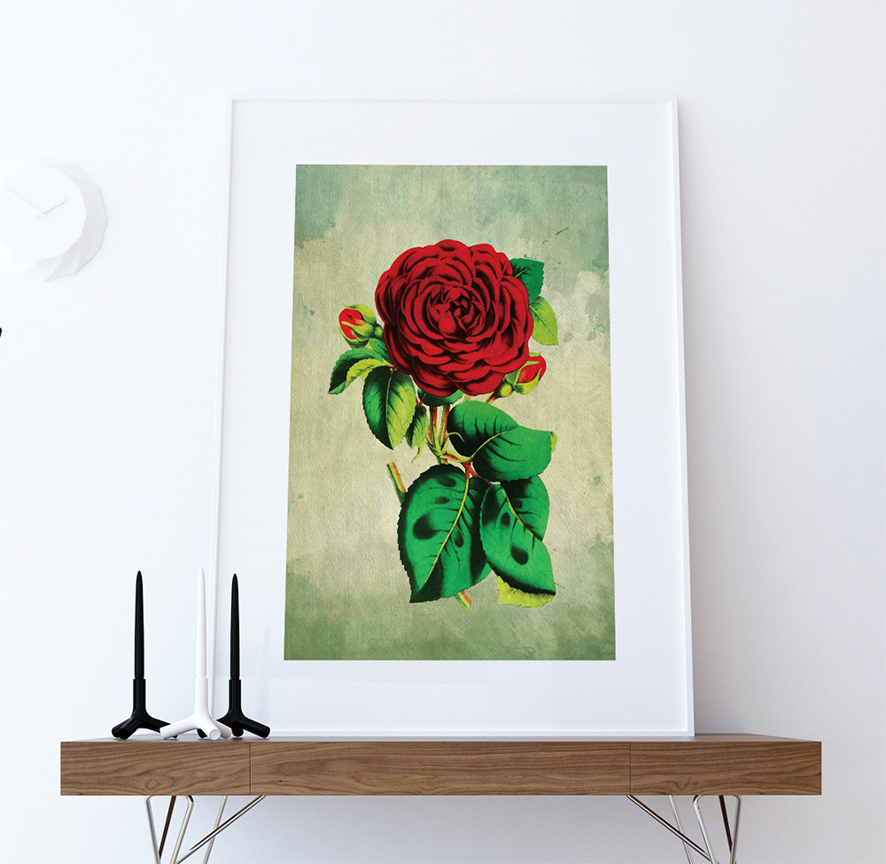 rose decor red rose art rose gift botanical print flower kitchen decor floral print floral wall. Black Bedroom Furniture Sets. Home Design Ideas