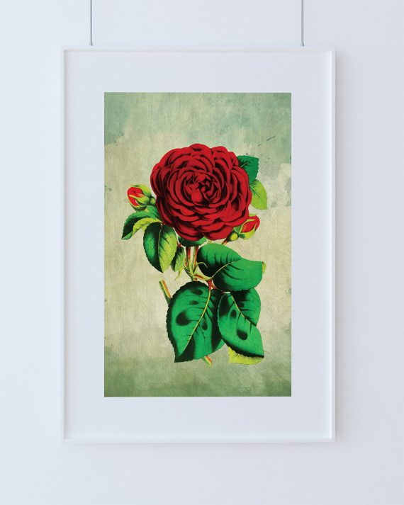 Rose decor Red Rose art Rose gift botanical print flower kitchen decor floral print floral wall decor wall art Canvas or Satin Photo Paper