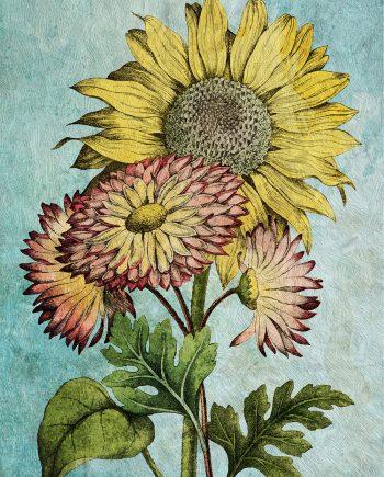 Sunflower decor sunflower art sunflower gift botanical print sunflower kitchen decor sunflower print sunflower Cotton Canvas & Paper Canvas