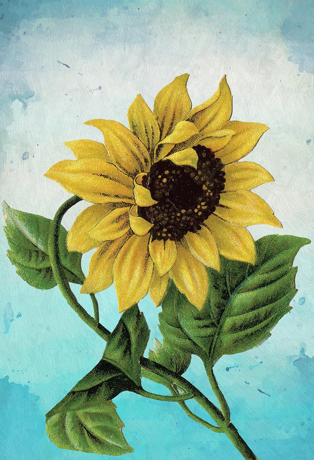 Sunflower Print Set of Two art botanical print flower Sunflowers ...