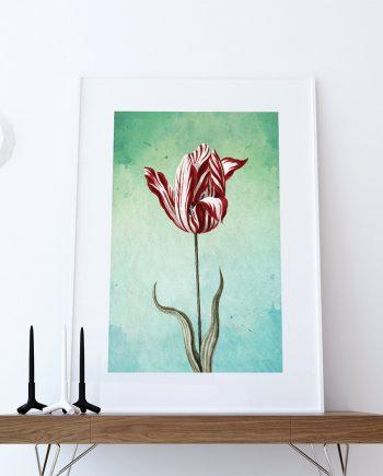 Tulip Print Tulip art botanical print flower Tulips decor floral print floral wall decor Tulip wall art Canvas
