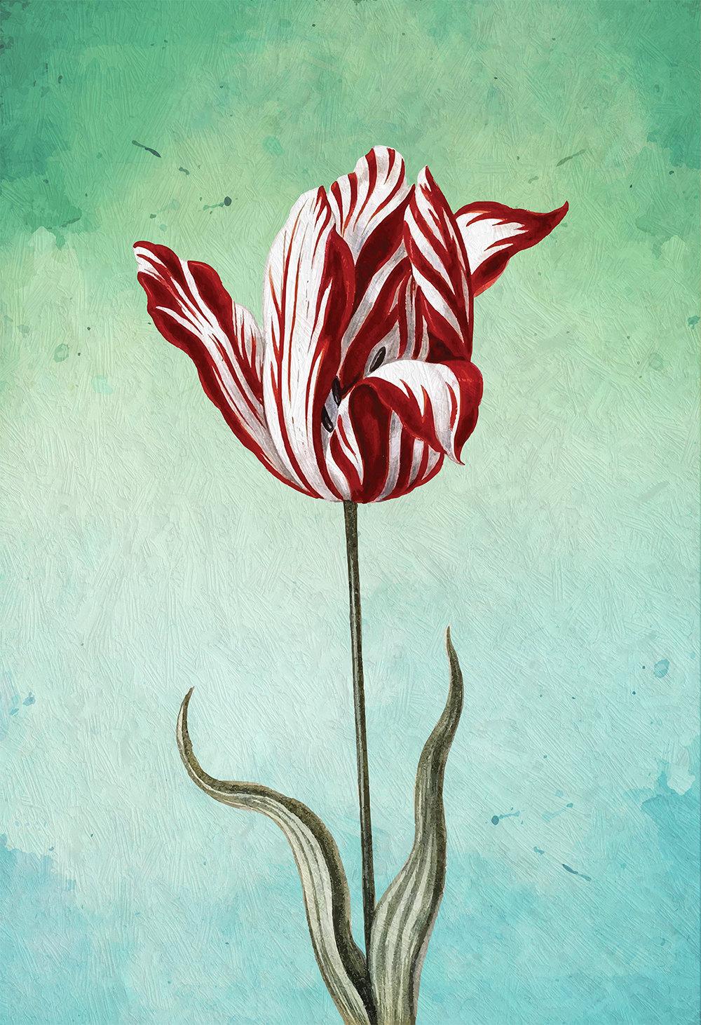 Tulip Print Tulip Art Botanical Print Flower Tulips Decor Floral