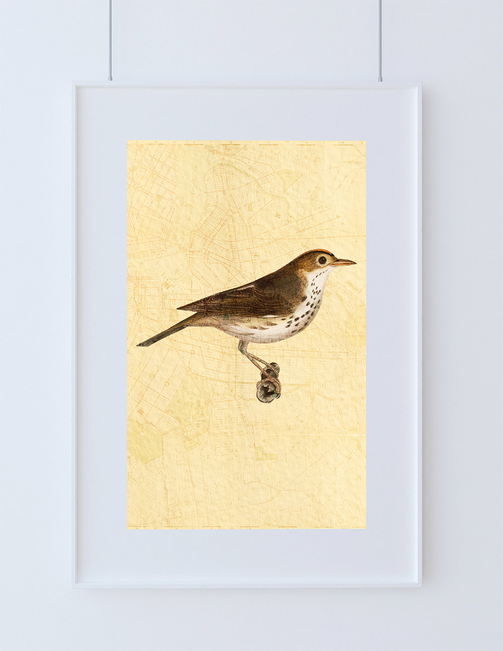 Attractive Wall Art Bird Pictures - Wall Art Collections ...
