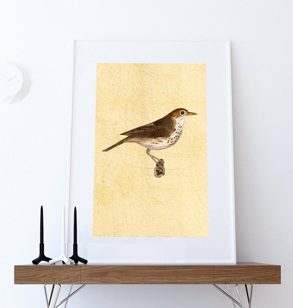 Vintage Bird Brooklyn Map Print Antique Bird Print Vintage Bird ...