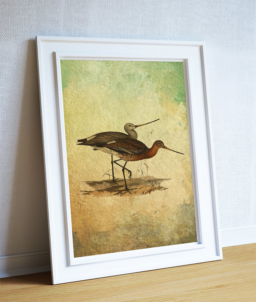 Vintage Bird Illustration Natural History Print Vintage Illustrated ...