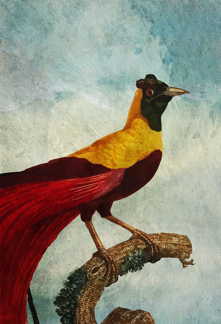 Vintage Bird of Paradise Print Antique Bird Print Prints illustrated bird print Bird wall decor natural history wall art Cotton Canvas