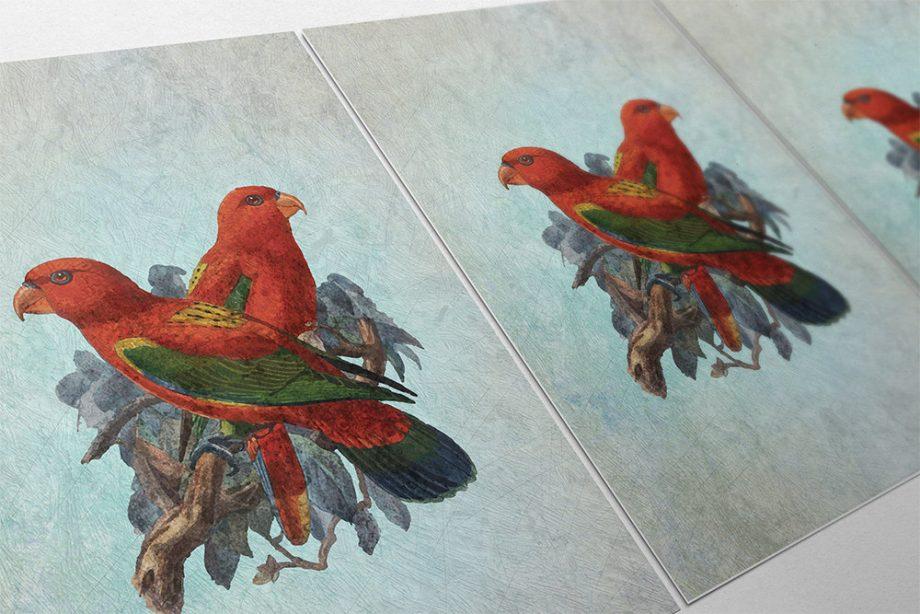 Vintage Bird Print Antique Bird Print Vintage Bird Prints Illustrated Bird Print Bird Wall Decor Natural History Wall Art on Canvas