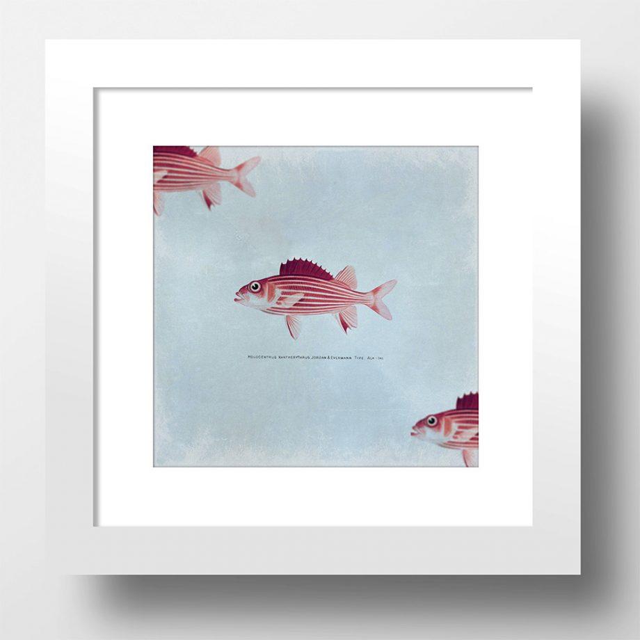 Vintage Fish Print Vintage Beach Art Print Vintage Nautical Decor Ocean Wall Art - Large Giclee Print on Cotton Canvas and Satin Photo Paper