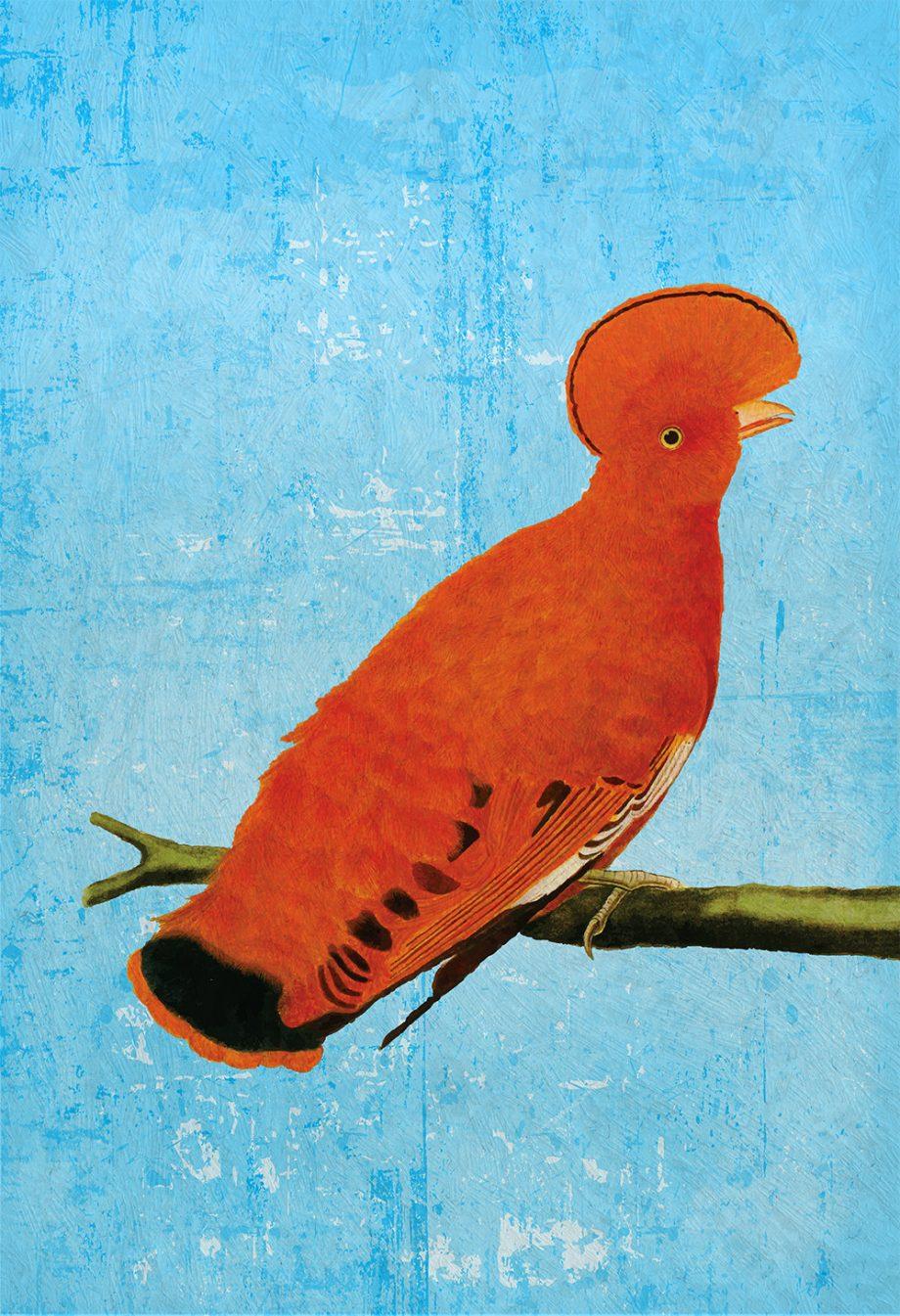 Vintage Martinet Print Antique Bird Print Vintage Bird Prints Illustrated Bird Print Bird Wall Decor Natural History Wall Art