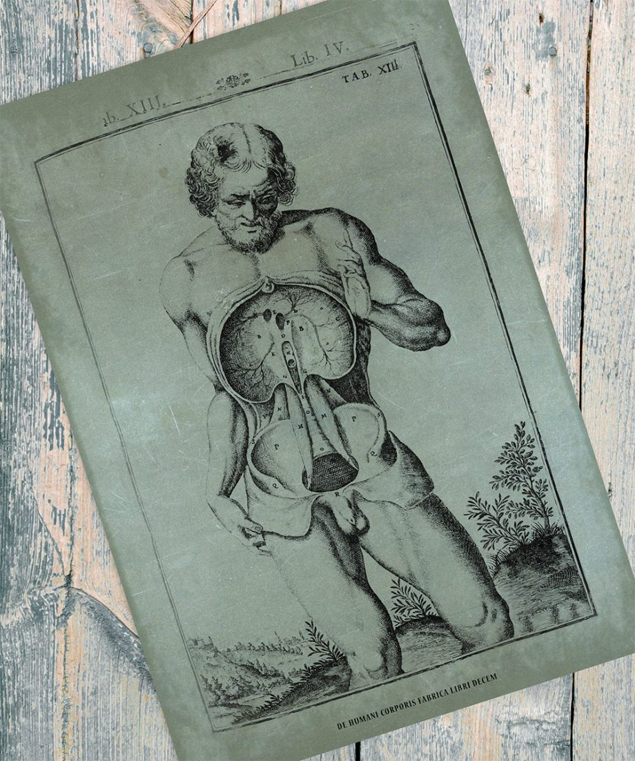 Vintage Medical Illustration Giclee Anatomy Print on Cotton Canvas and Paper Canvas Home Wall Decor