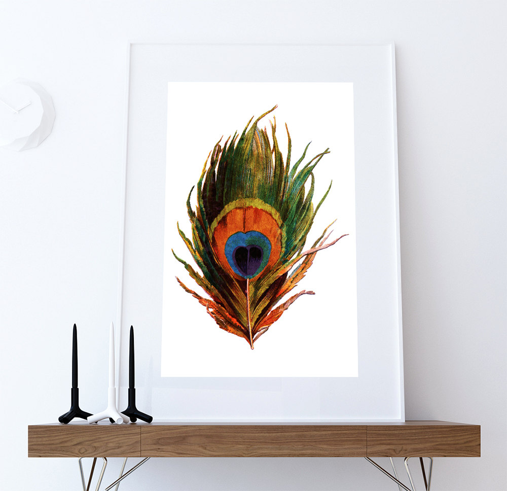 Vintage peacock feather print prints illustrated bird for Bird wall art