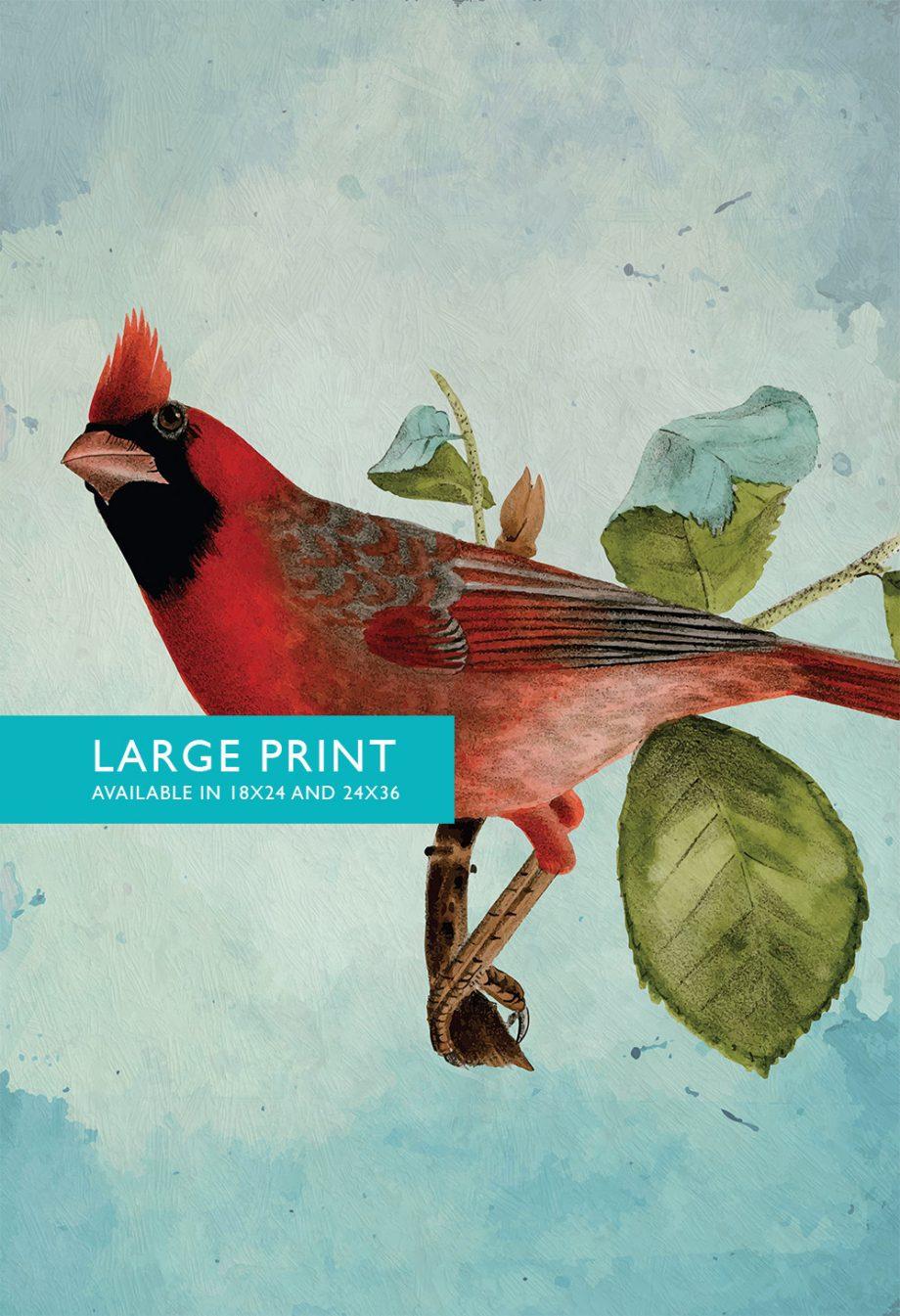 Vintage Red Cardinal Print Antique Bird Print Prints illustrated bird print Bird wall decor natural history wall art Cotton Canvas