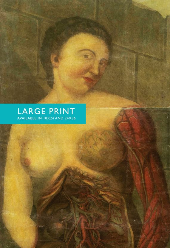 Vintage Victorian Medical Female Anatomy Print Giclee Anatomy Print  18x24 24x36 - Large Giclee Print Cotton Canvas and Satin Photo Paper