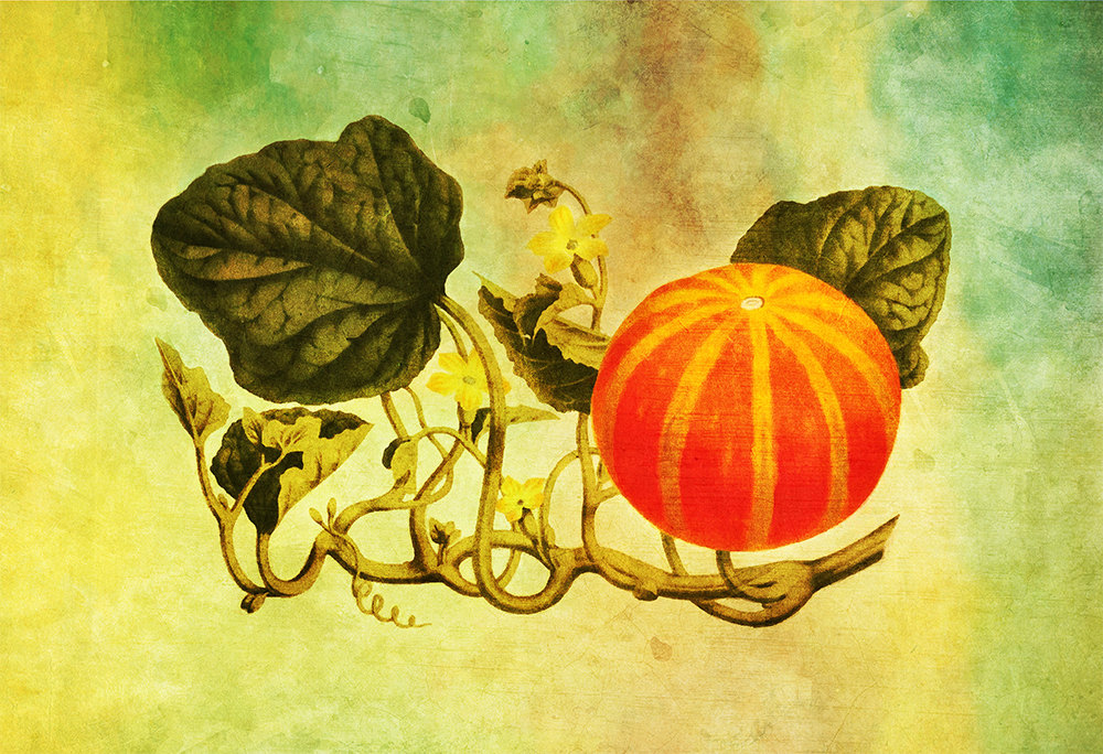 Vintage Victorian Pumpkin Print Kitchen Fall Decor Giclee Print on ...