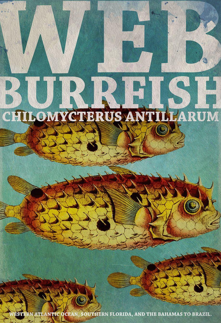 "Vintage Web Burrfish Fish Print 18x24"" 24x36"" Victorian Beach Art Print Vintage Nautical Decor Ocean Wall Art Giclee Print on Canvas & Satin"