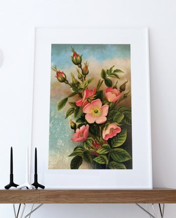 Vintage Wild Roses Print art Rose gift botanical print flower decor floral print floral wall decor wall art Canvas