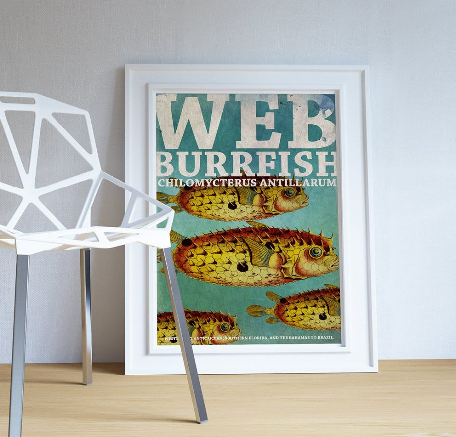 Web Burrfish Fish Print Vintage Nautical Decor Ocean Wall Art - Giclee Print on Cotton Canvas and Paper Canvas